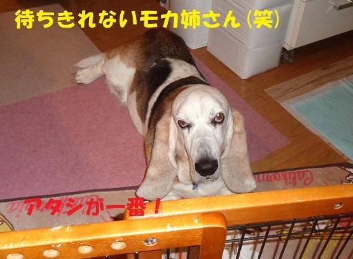 モカ姉さん15歳になりました♪_f0121712_23343591.jpg