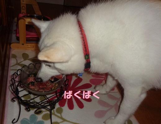 モカ姉さん15歳になりました♪_f0121712_23404837.jpg