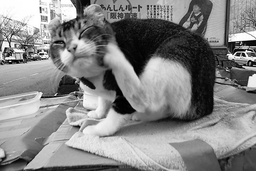 大木一範写真展「ネコス」 6/2(日)~9(日)_f0138928_08274377.jpg