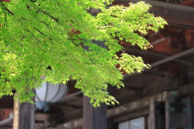 【護国寺】part 1_f0348831_00280787.jpg