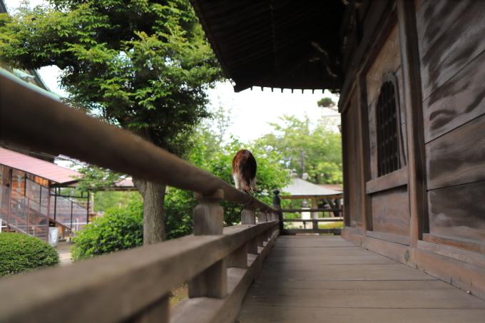 【護国寺】part 2_f0348831_00291299.jpg