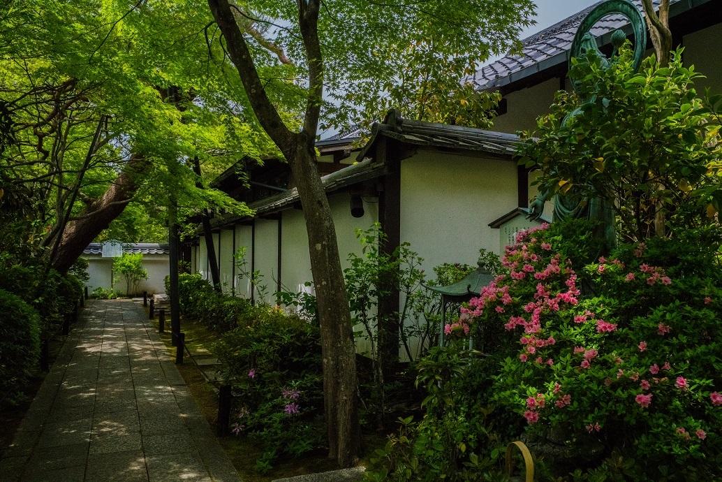 退蔵院に咲く花々_e0363038_10134931.jpg