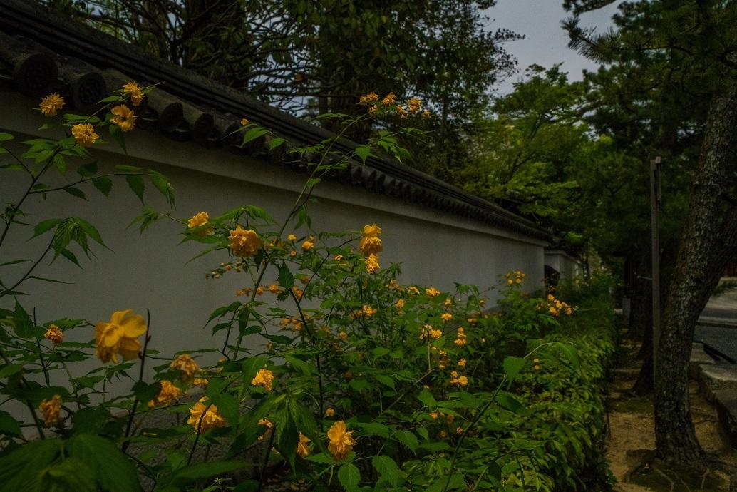 退蔵院に咲く花々_e0363038_10135309.jpg