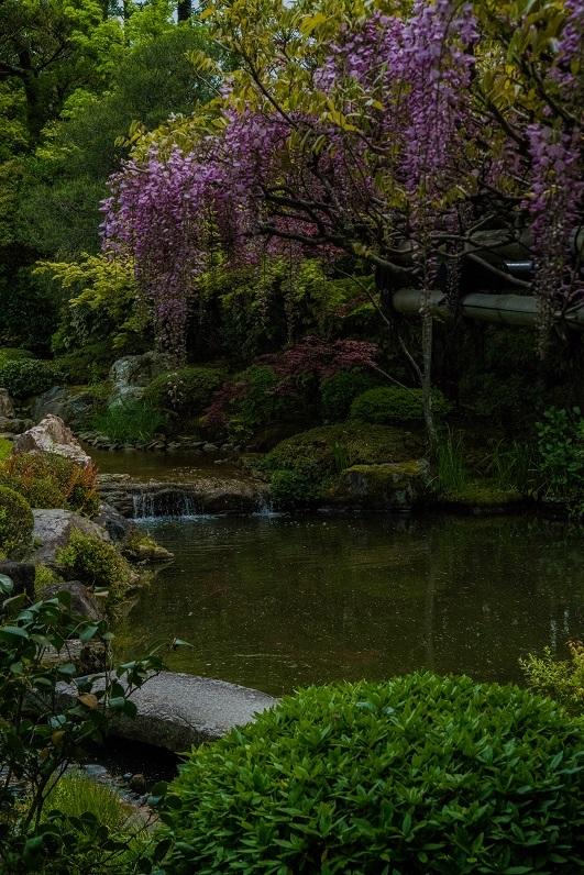 退蔵院に咲く花々_e0363038_10141383.jpg