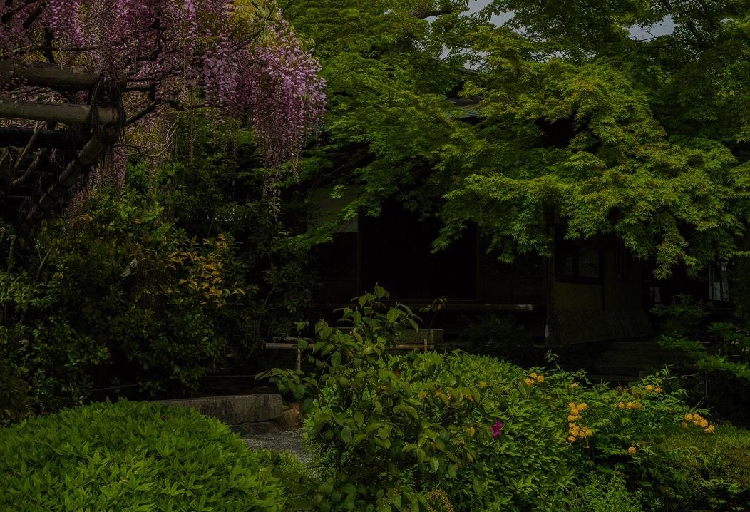 退蔵院に咲く花々_e0363038_10141603.jpg