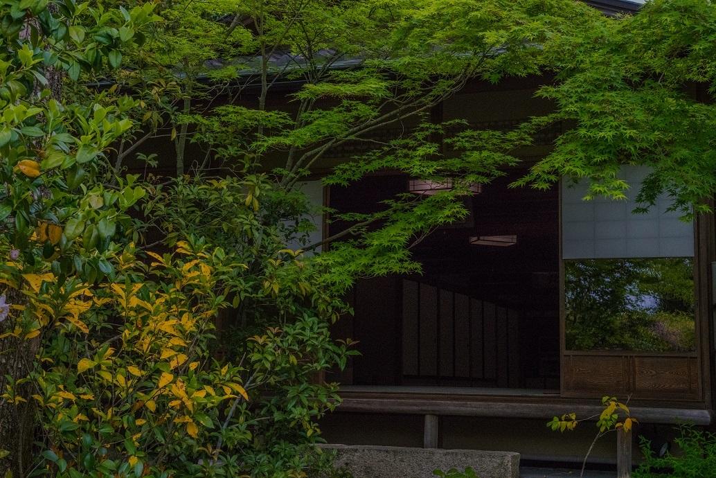 退蔵院に咲く花々_e0363038_10142498.jpg