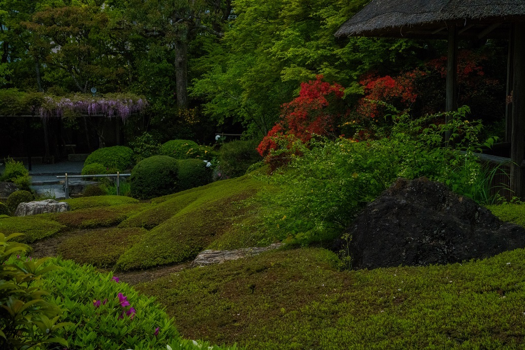 退蔵院に咲く花々_e0363038_10142841.jpg