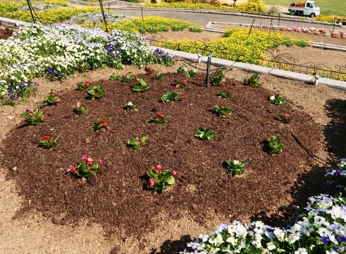 和歌山県植物公園緑花センター  2019-06-01 00:00   _b0093754_17302095.jpg