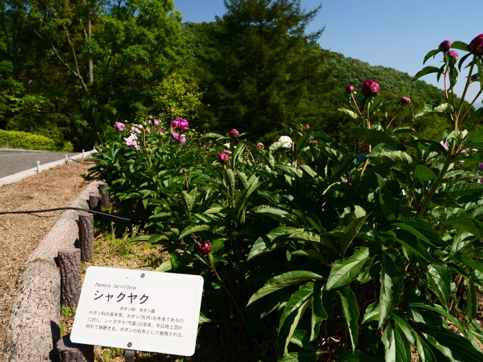 和歌山県植物公園緑花センター  2019-06-01 00:00   _b0093754_17305644.jpg