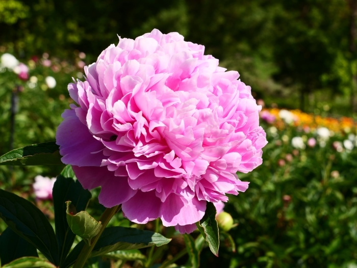 和歌山県植物公園緑花センター  2019-06-01 00:00   _b0093754_17310997.jpg