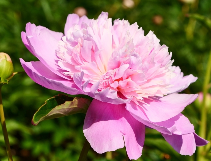 和歌山県植物公園緑花センター  2019-06-01 00:00   _b0093754_17313578.jpg