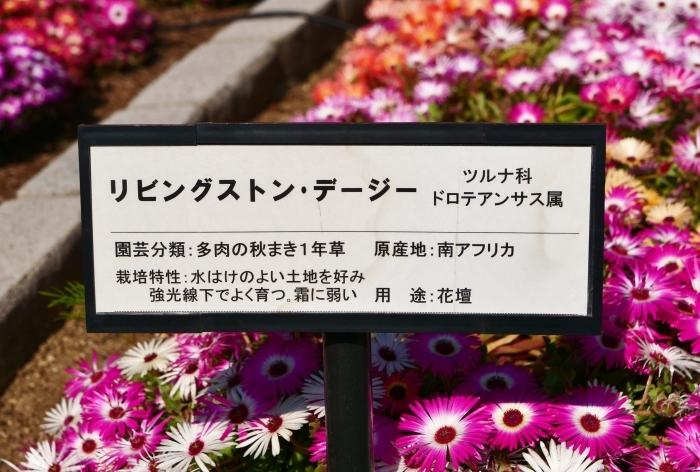 和歌山県植物公園緑花センター  2019-06-01 00:00   _b0093754_17315936.jpg