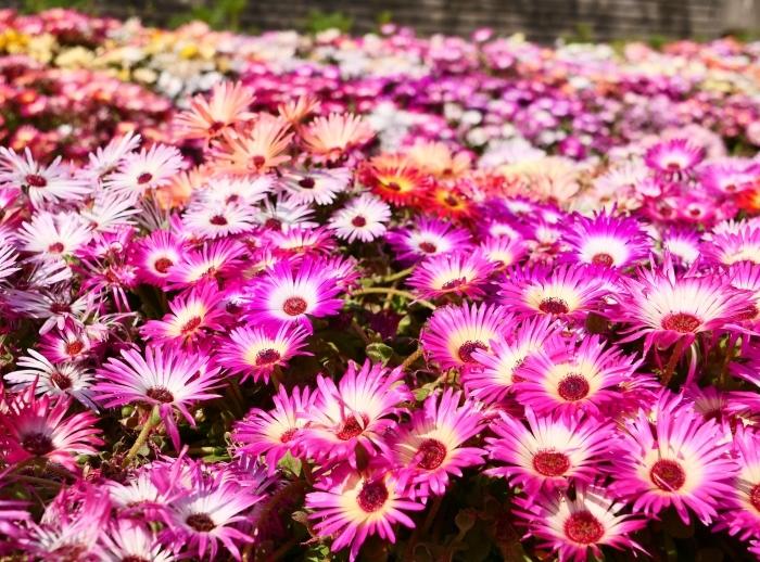 和歌山県植物公園緑花センター  2019-06-01 00:00   _b0093754_17321514.jpg