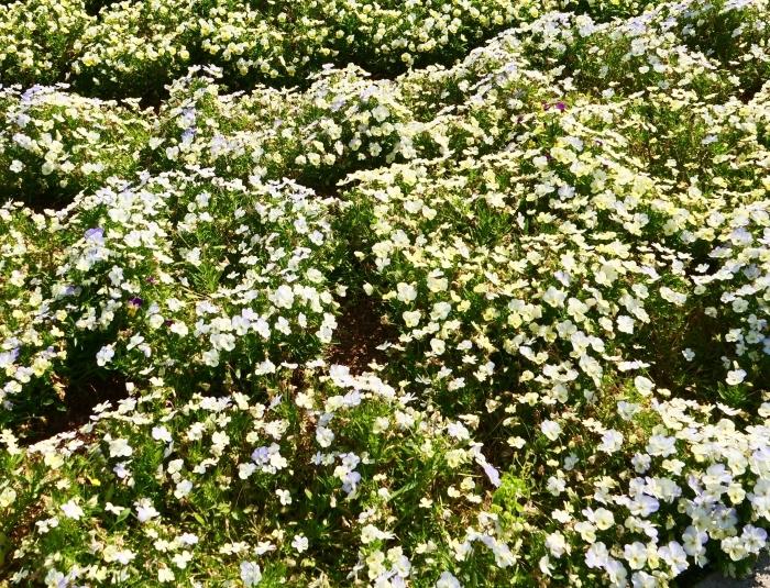 和歌山県植物公園緑花センター  2019-06-01 00:00   _b0093754_17324127.jpg