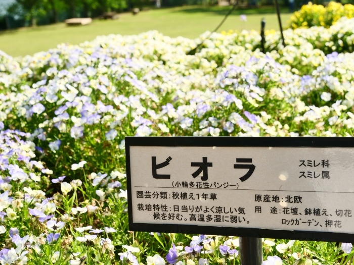 和歌山県植物公園緑花センター  2019-06-01 00:00   _b0093754_17325558.jpg