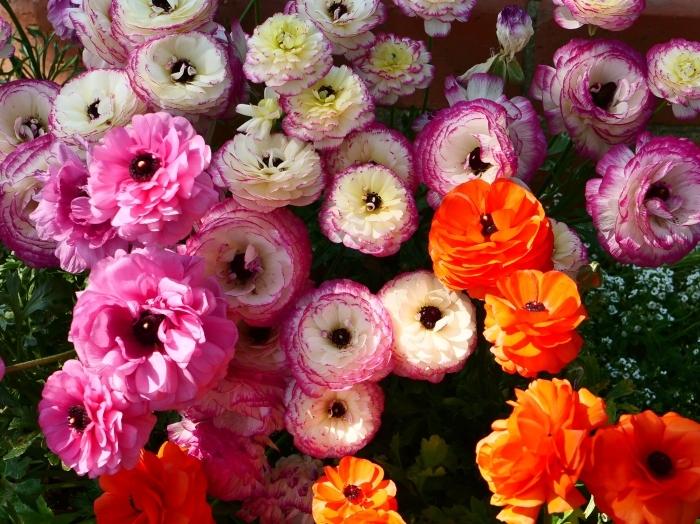 和歌山県植物公園緑花センター  2019-06-01 00:00   _b0093754_17334512.jpg