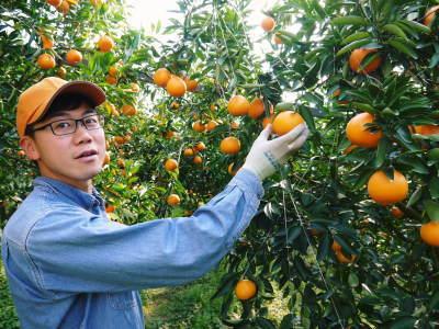 究極の柑橘「せとか」 今年も元気な花が咲きました!収穫は2月上旬!惜しまぬ手間ひまと匠の技で育てます_a0254656_18060704.jpg