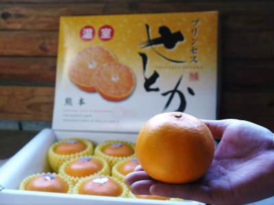 究極の柑橘「せとか」 今年も元気な花が咲きました!収穫は2月上旬!惜しまぬ手間ひまと匠の技で育てます_a0254656_18104529.jpg