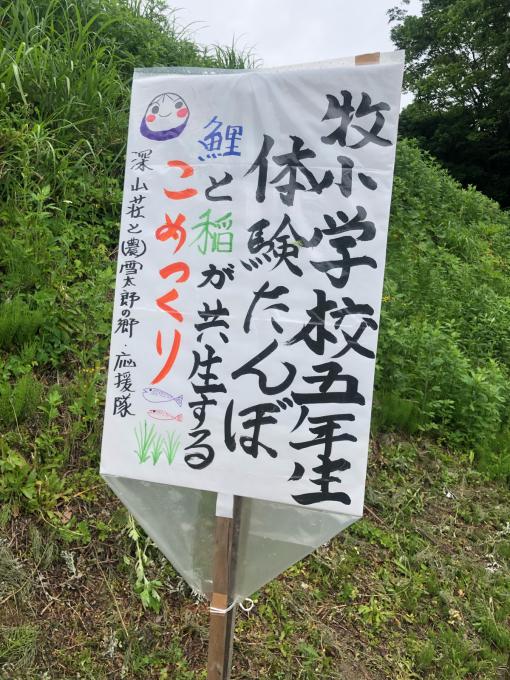 牧小学校5年生 体験たんぼ_d0182179_18055926.jpg