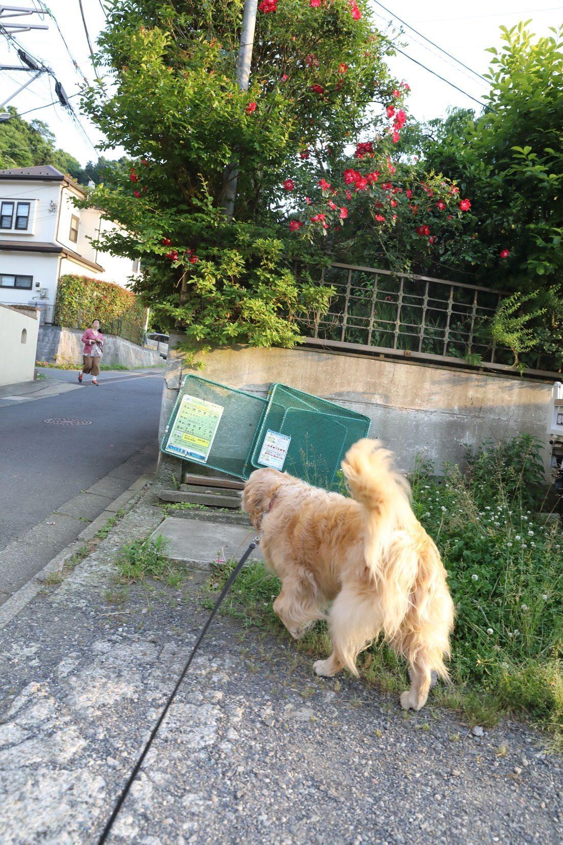 三人で近所の公園♪_b0275998_20340546.jpg