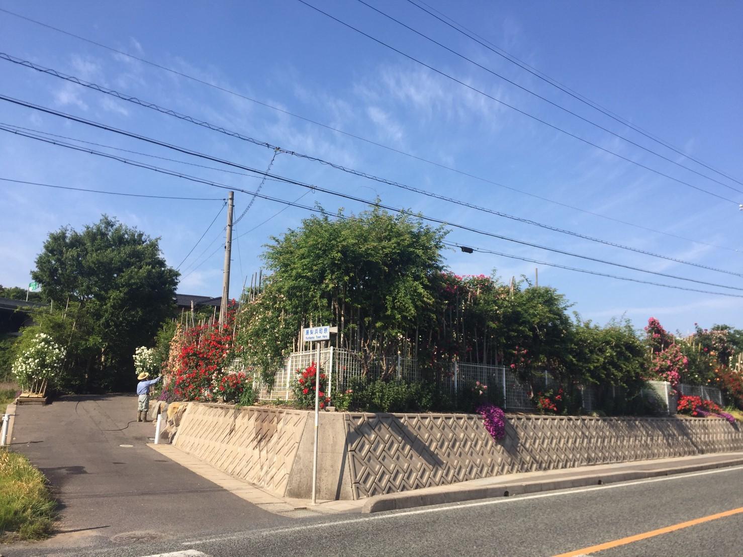 Rose Garden Fujii_e0115904_12105701.jpg