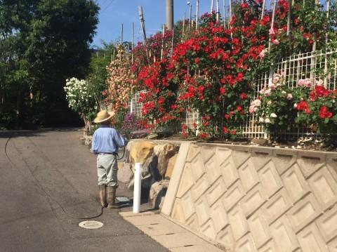 Rose Garden Fujii_e0115904_12110916.jpg