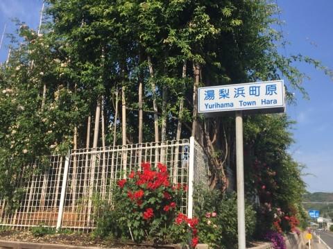 Rose Garden Fujii_e0115904_12115286.jpg