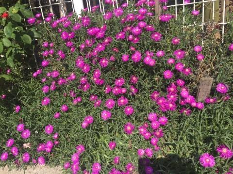 Rose Garden Fujii_e0115904_12201390.jpg
