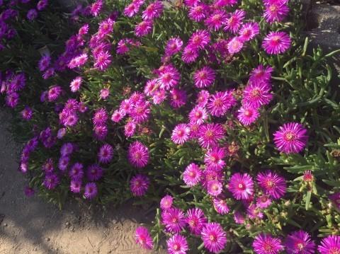 Rose Garden Fujii_e0115904_12275168.jpg