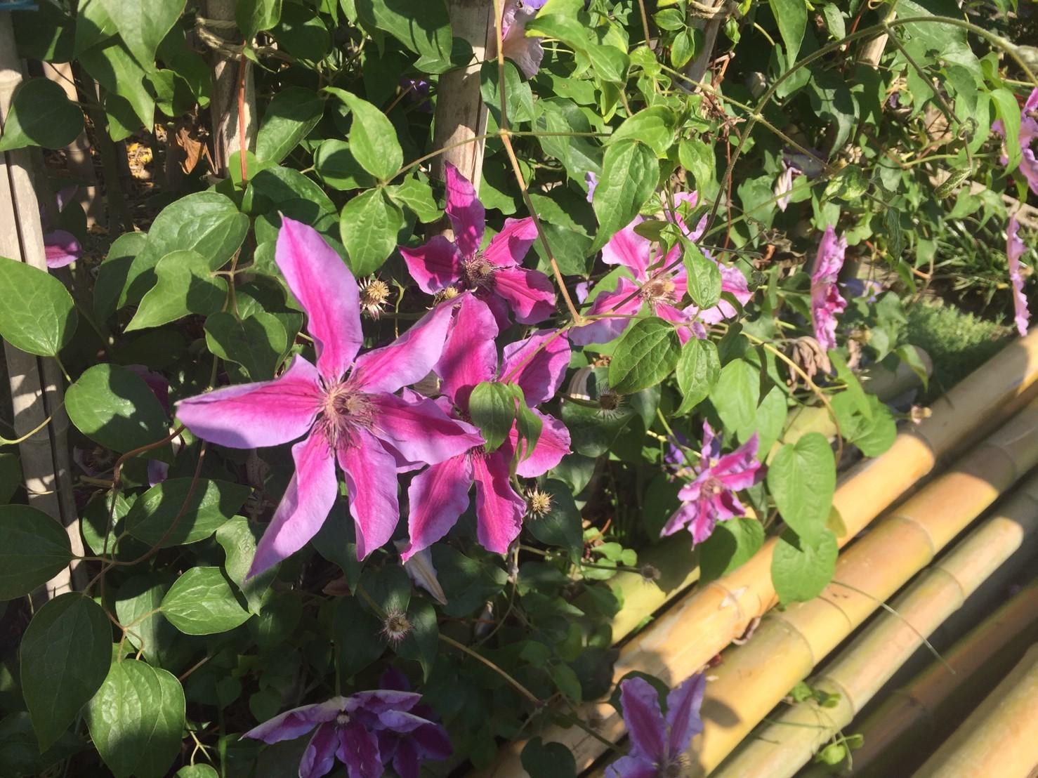Rose Garden Fujii_e0115904_12281871.jpg