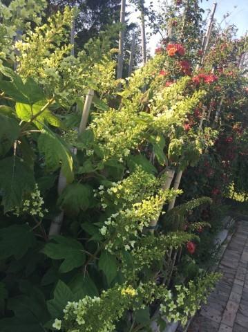 Rose Garden Fujii_e0115904_12534407.jpg