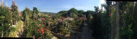 Rose Garden Fujii_e0115904_12555943.jpg