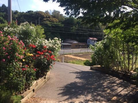Rose Garden Fujii_e0115904_13071972.jpg