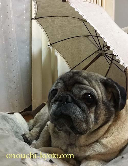 インドやミャンマーの想い出日傘の張替え_f0184004_11364389.jpg