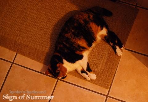 猫が落ちてる季節の始まり_b0253205_11344223.jpg