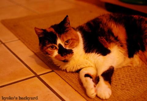 猫が落ちてる季節の始まり_b0253205_11345286.jpg