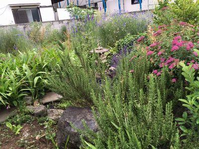 師匠の庭を見に行ってきた_e0234016_17510559.jpg