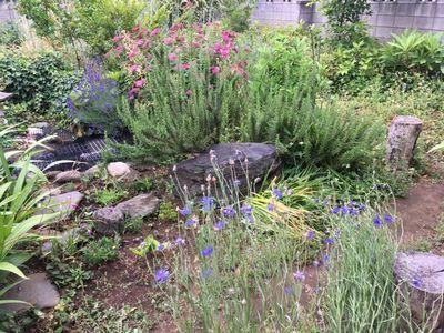 師匠の庭を見に行ってきた_e0234016_17512811.jpg