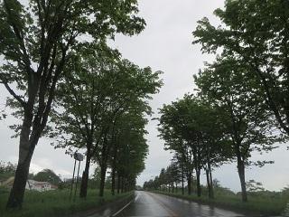 大雨から晴れになり_b0405523_13104958.jpg