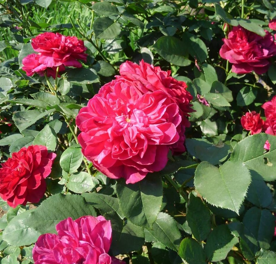バラの庭_f0129627_15152402.jpg
