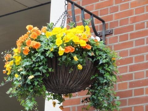 花いっぱいのLONDON~♪_c0079828_23460961.jpg