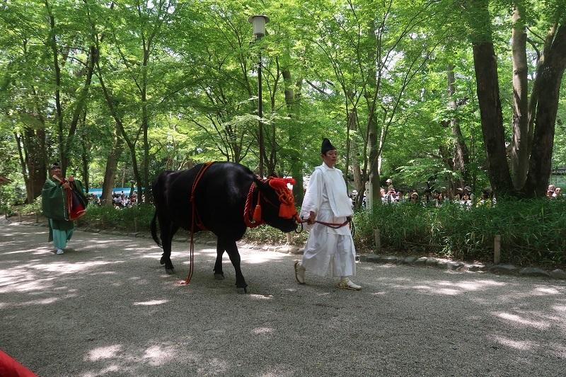葵祭とラリー_f0076731_07231314.jpg