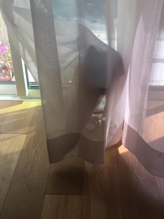 かくれんぼする豆柴と刺繍をするばあばと_f0155431_21503313.jpg