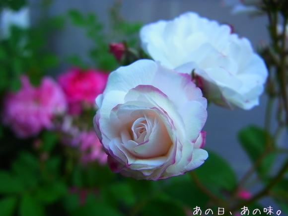 【ふたり弁】揚げない唐揚げ。おやつと薔薇と、懸賞当たった。_a0305046_09320689.jpg