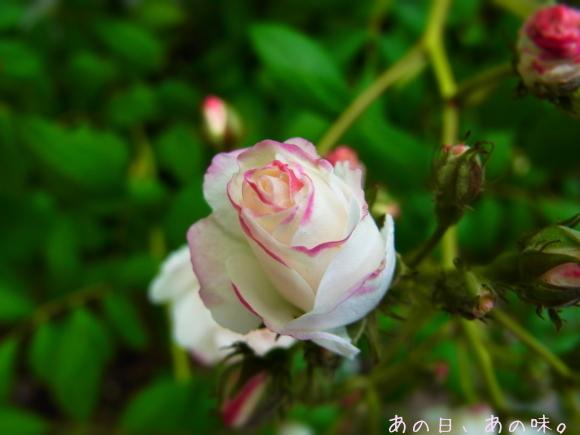 【ふたり弁】揚げない唐揚げ。おやつと薔薇と、懸賞当たった。_a0305046_09332092.jpg