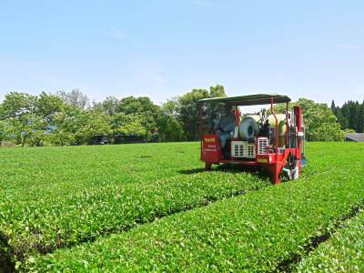 菊池水源茶 茶摘みの様子(2019)!濃い色に育て上げ、茶摘!今年も生茶の香りが最高なんです!!_a0254656_17222588.jpg