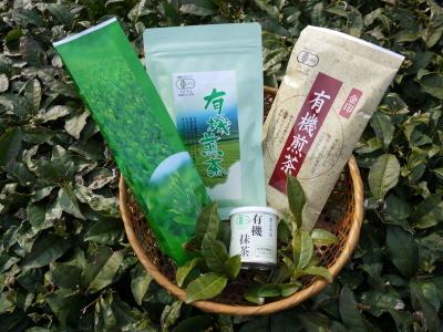 菊池水源茶 茶摘みの様子(2019)!濃い色に育て上げ、茶摘!今年も生茶の香りが最高なんです!!_a0254656_18143704.jpg