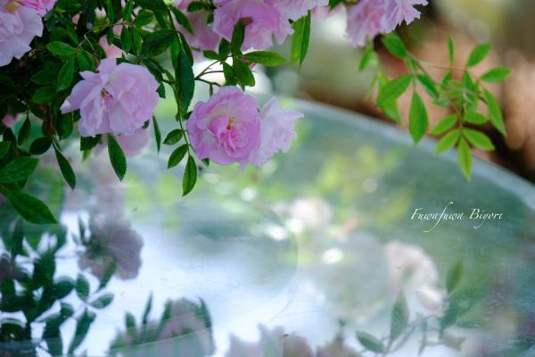 薔薇 **_d0344864_19462162.jpg