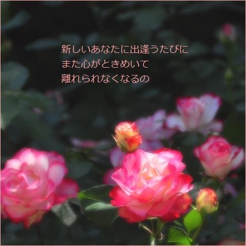 b0154475_00123012.jpg