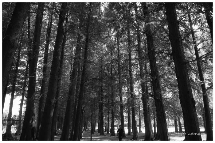 木陰を歩く_b0246079_20372324.jpg
